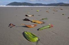 Dokąd zwrotniki spotykają plażę fotografia royalty free