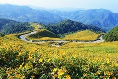 Dok Bua Tong op een berg Royalty-vrije Stock Fotografie