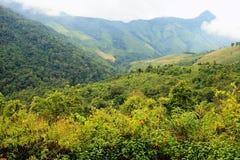 Dok Bua Tong op een berg Stock Afbeelding