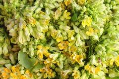 Dok Jik, local Thai vegetable in basket Royalty Free Stock Photo