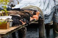 dok met netten en behandelde boot stock foto