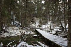 Dok prowadzi nigdzie po środku lasu Zdjęcie Royalty Free