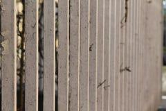 Dokonanego żelaza ogrodzenie - bardzo płytka pole głębia fotografia stock
