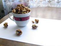 Dokrętek nasiona w herbacianej filiżance Fotografia Stock