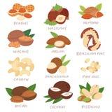 Dokrętki wektorowy nutshell hazelnut, orzecha włoskiego lub migdału dokrętki ustawia odżywianie z nerkodrzewu arachidem i kasztan Obrazy Stock