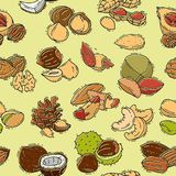 Dokrętki wektorowy nutshell ilustraci nerkodrzewu ustalony arachid i kasztan z nutmeg hazelnut orzecha włoskiego i migdału Fotografia Stock