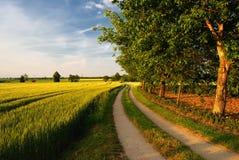 Dokrętek drzewa na drodze przez farmfields Fotografia Royalty Free