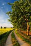 Dokrętek drzewa na drodze przez farmfields Zdjęcie Royalty Free