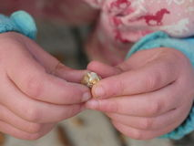 Dokrętki dziecka ręki jesień Obrazy Royalty Free