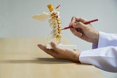 Doktor demonstrieren Anatomie des zervikalen Dornmodells lizenzfreie stockfotografie