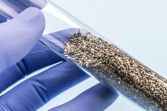 Doktor hält Reagenzglas mit Samen für Studie in einem Labor stockbild