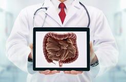 Doktor mit Stethoskop in einem Krankenhaus Verdauungssystem auf der Tablette stockfotos