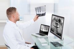 Doktor oder Radiologe, die online einen Röntgenstrahl betrachten Lizenzfreie Stockfotografie