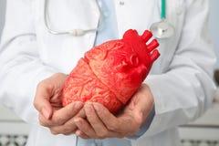 Doktor som rymmer hjärtamodellen, closeup cardiology royaltyfria bilder