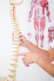 Doktor som visar den anatomiska ryggen royaltyfria foton