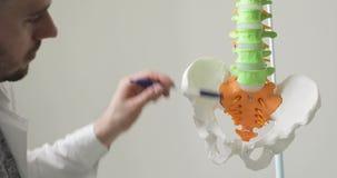Doktor zeigt auf Becken- Knochen und Dorn auf anatomischem Modell des Dorns stock footage