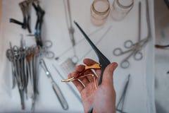 Doktorchirurg hält in seiner Hand ein schwarzes medizinisches Clip für die Ausführung einer Operation stockbilder