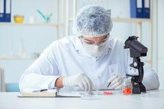 Doktorn som testar nya droger för medicinska avsikter Royaltyfria Bilder