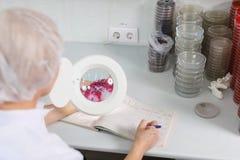 Doktorn undersöker den petri maträtten under förstoringsapparaten, närbild Royaltyfri Foto