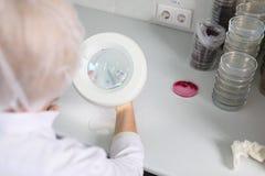 Doktorn undersöker den petri maträtten under förstoringsapparaten, närbild Arkivfoton