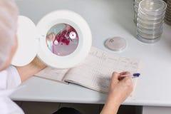 Doktorn undersöker den petri maträtten under förstoringsapparaten, närbild Royaltyfri Fotografi
