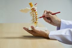 Doktorn visar anatomi av den cervikala inbindningsmodellen royaltyfri fotografi