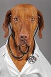 Doktorshund fotografering för bildbyråer