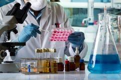 Doktorska uprawowa komórki tkanka w kultura talerzu na laborator zdjęcie royalty free