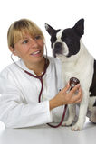 doktorski żeński weterynarz Fotografia Royalty Free