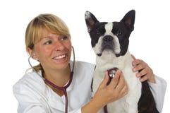 doktorski żeński weterynarz Fotografia Stock