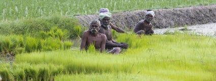 Dokumentarisches redaktionelles Bild Landwirte bauen Reis in der Regenzeit an Sie wurden mit für plantin vorbereitet zu werden ge Stockfoto