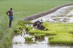 Dokumentarisches redaktionelles Bild Landwirte bauen Reis in der Regenzeit an Sie wurden mit für plantin vorbereitet zu werden ge Stockbilder