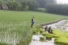 Dokumentarisches redaktionelles Bild Landwirte bauen Reis in der Regenzeit an Sie wurden mit für plantin vorbereitet zu werden ge Stockfotos