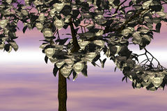 dolar drzewo Fotografia Royalty Free