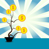 Dolarowa roślina Obraz Stock
