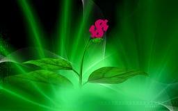 dolarowa roślina Zdjęcie Stock