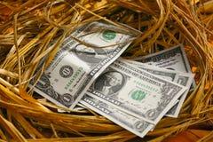 Dolarowy banknot w gniazdowych jajkach, Rosnąć biznes i geneza biznes, Nowy biznes zaczyna banknotami, Biznesowy pojęcie Fotografia Stock