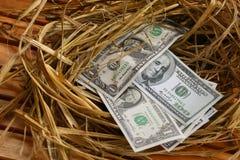 Dolarowy banknot w gniazdowych jajkach, Rosnąć biznes i geneza biznes, Nowy biznes zaczyna banknotami, Biznesowy pojęcie Zdjęcie Royalty Free