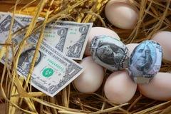 Dolarowy banknot w gniazdowych jajkach, Rosnąć biznes i geneza biznes, Nowy biznes zaczyna banknotami, Biznesowy pojęcie Zdjęcie Stock
