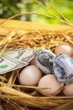 Dolarowy banknot w gniazdowych jajkach, Rosnąć biznes i geneza biznes, Nowy biznes zaczyna banknotami, Biznesowy pojęcie Obrazy Stock