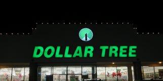 Dolarowy drzewo Zdjęcia Stock