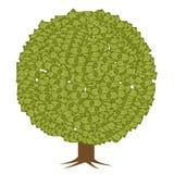 Dolarowy drzewo Obrazy Stock