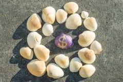 Dolarowy znak na skorupie Tło z czystymi seashells Fotografia Royalty Free
