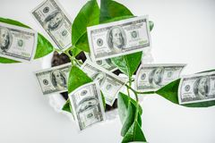 Dolary, pieniądze, r na gałąź zielony drzewo Pieniądze t Obraz Royalty Free