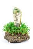 dolary trawa zieleń Fotografia Royalty Free