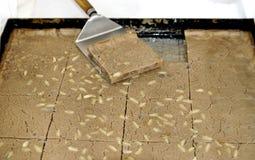 Dolce italiano fatto con la farina della castagna Immagine Stock Libera da Diritti