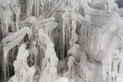 Dold buske för is arkivfoton