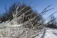 Dold buske för is arkivbilder
