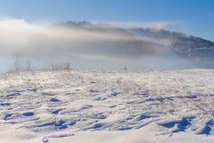 Dold buske för snö i vinterberg arkivfoto