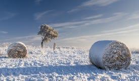 Dold hayfield för snö Arkivbild
